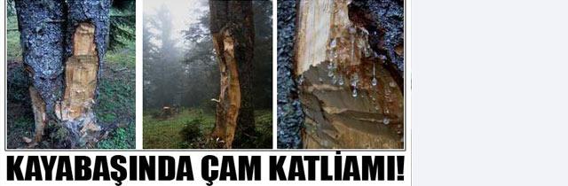 Kayabaşında Ağaç Katlimaı Var