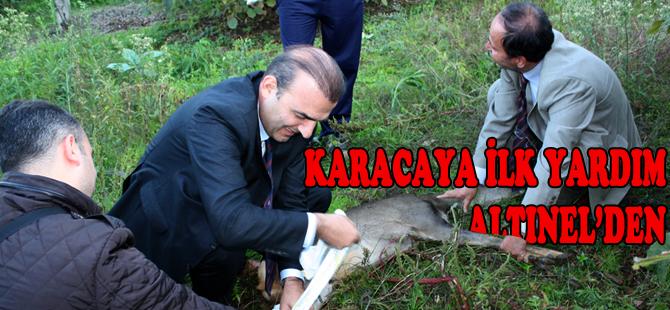 Karacaya başkan şefkati