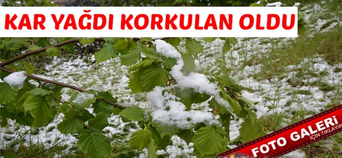 Kar Yağdı Fındık Dondu