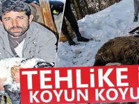 Tehlikeyle Koyun Koyuna
