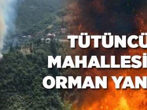 Akçaabat'ta Orman Yangını