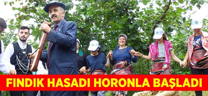 Fındık Hasadı Horonla Başladı