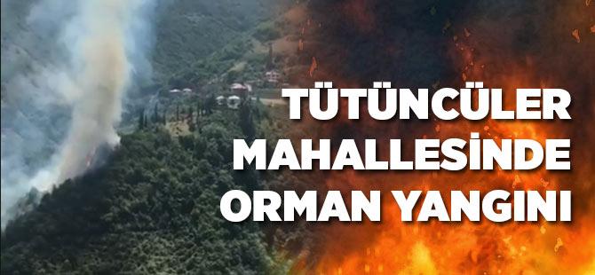 Tütüncüler Mahallesinde Orman Yangını
