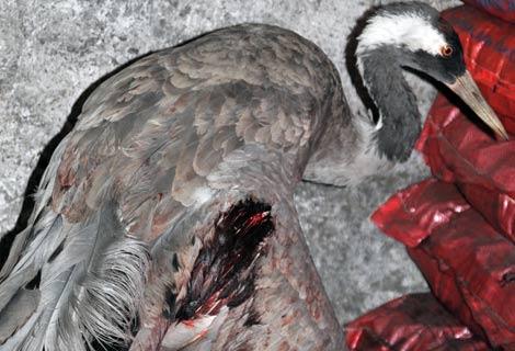 Avcılar Kavga Etti