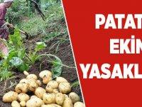 Akçaabat'ta patates karantinası