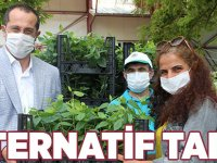 ​​​​​​​AKÇAABAT'TA ALTERNATİF TARIM