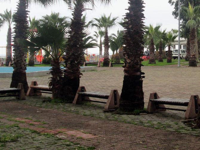 akcaabat-sahil-palmiye.jpg