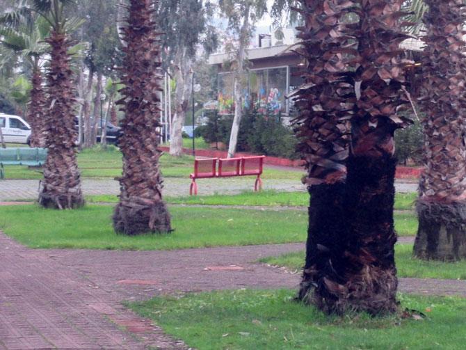 akcaabat-sahil-palmiye1.jpg